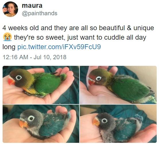 Bird Tiddy Goth Gf