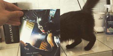 Коты и постеры