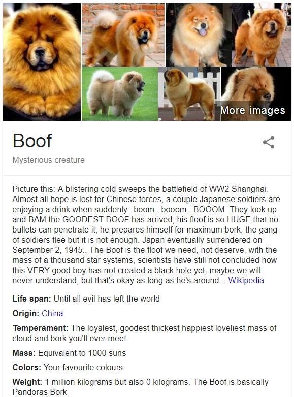 Паблик о собаках пародирует справки Google