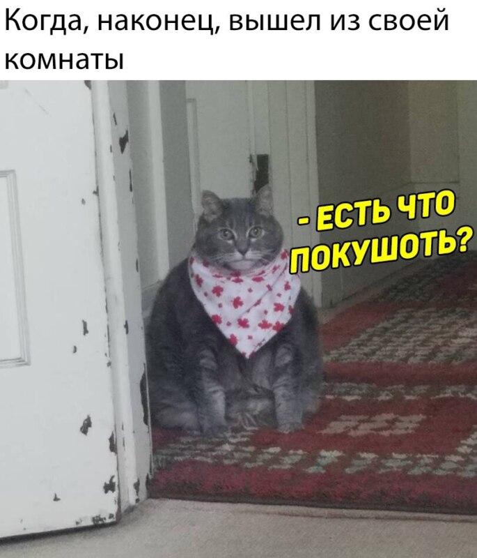 Есть чо покушот кот в слюнявчике мем