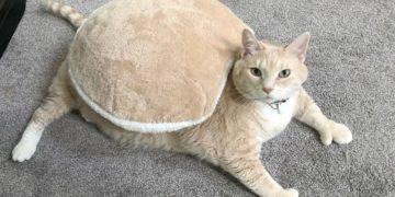 Кот-толстяк Бронсон