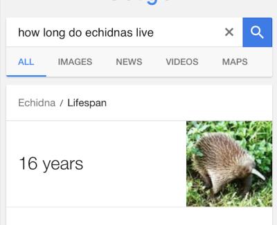 Сколько лет X?