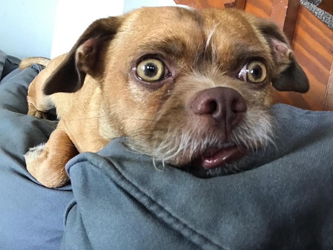 Пёс с испуганным лицом