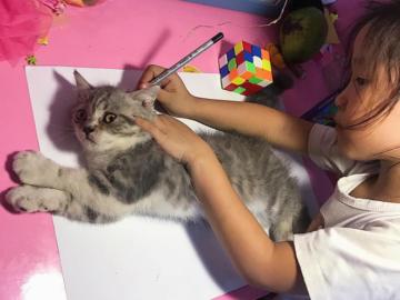 Девочка обводит кошку