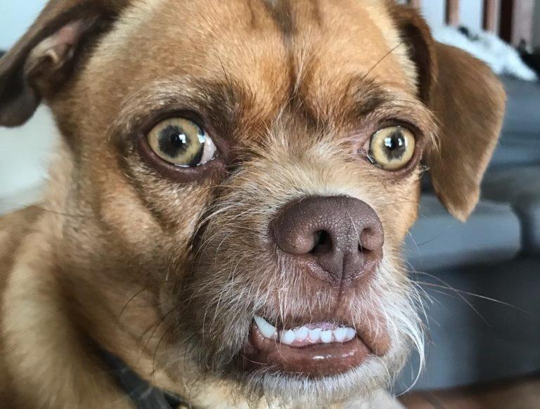 Пёс с взволнованным лицом