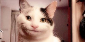 Вежливый кот