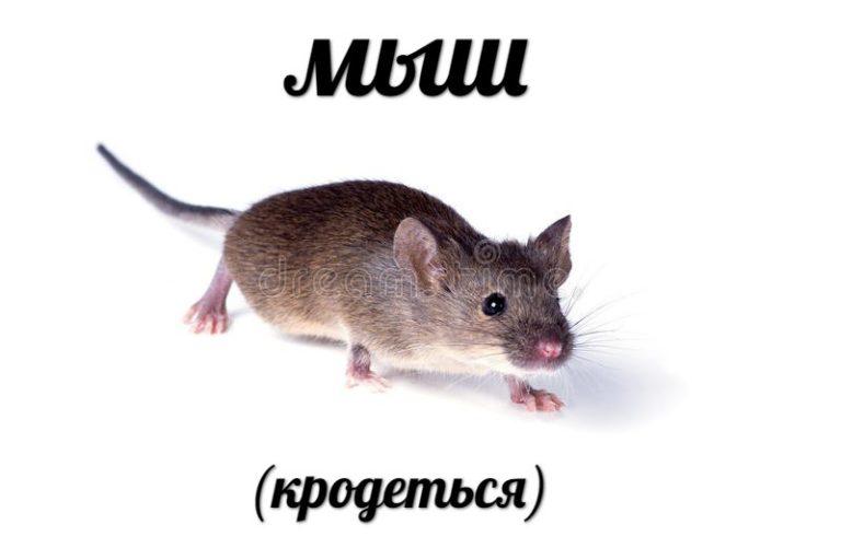 mi0-768x490.jpg