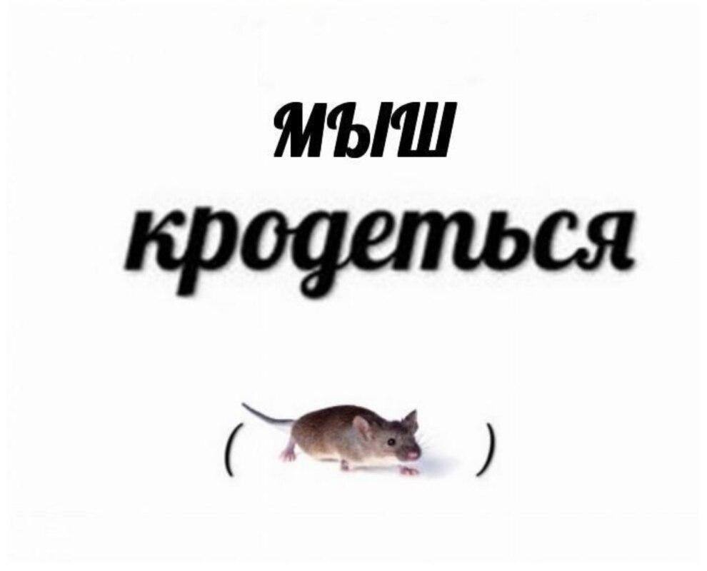 Мыш (кродеться) наоборот
