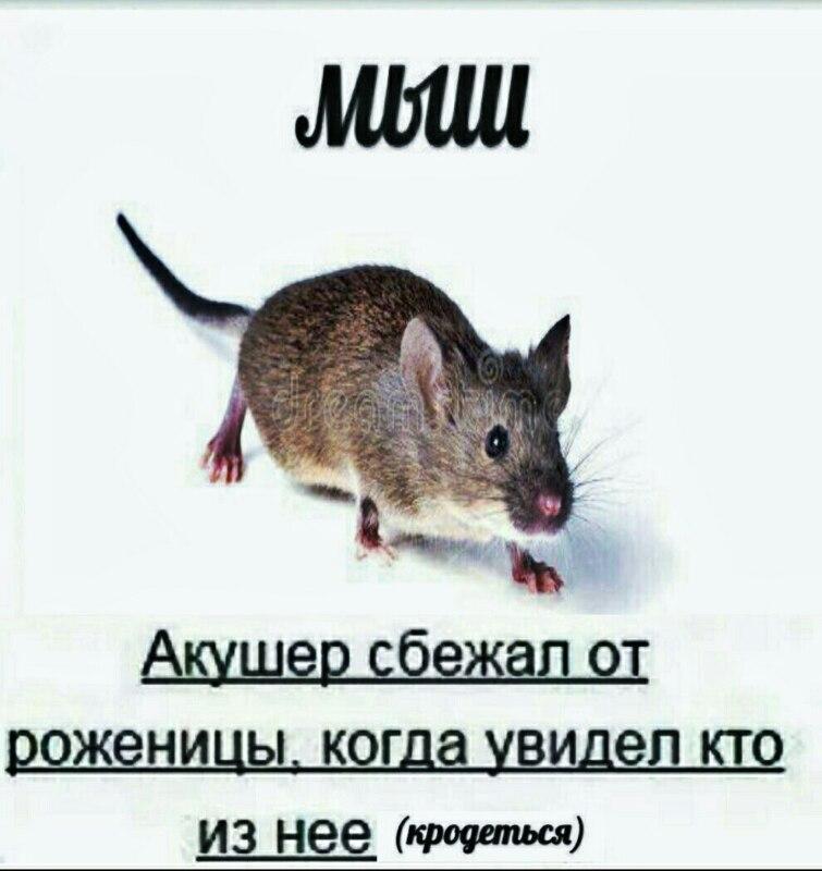 Акушер сбежал когда увидел что мыш кродеться