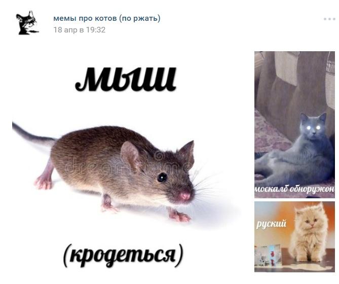 Первая мем про мыш (кродеться)