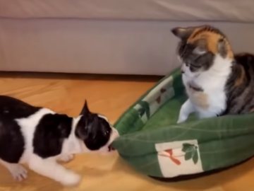 Кот не отдает лежанку щенку