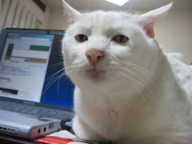 Серьезный кот