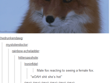 male fox reacting