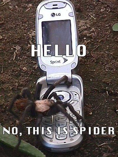 Алло. Нет, это паук