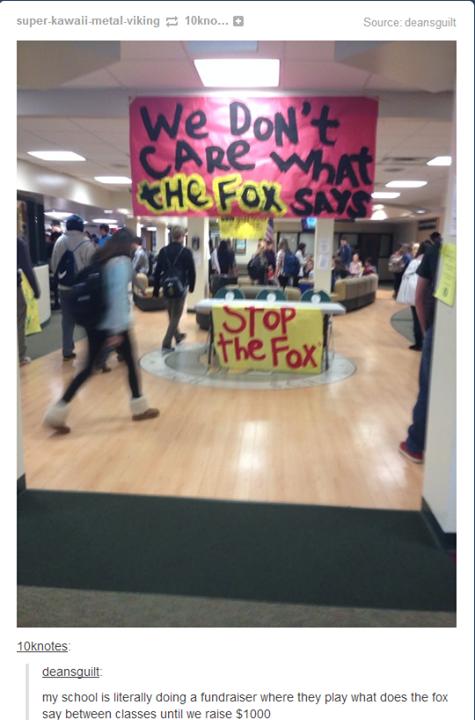 stop the fox