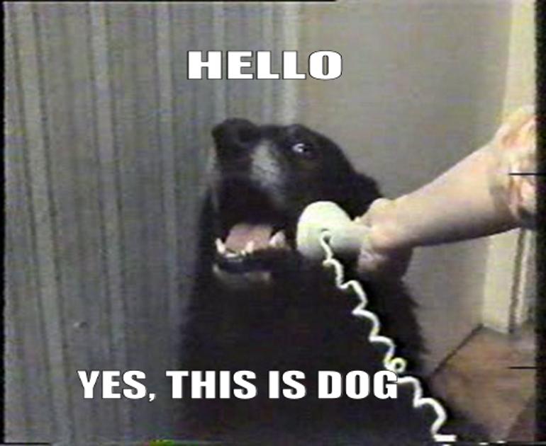 tumblr да это пес
