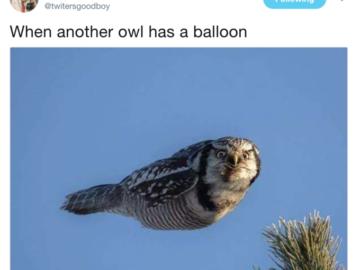 When Another Boy Has A Balloon Owl