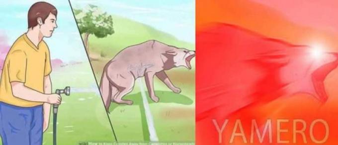 Yamero Dog