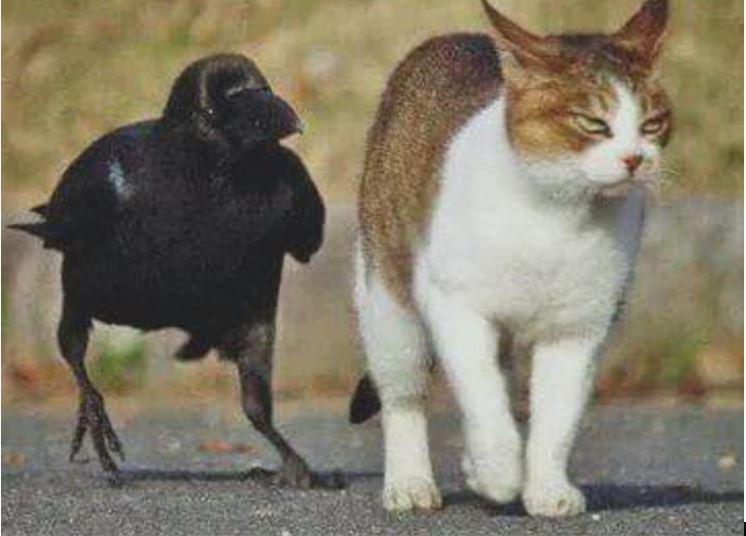 Юмор персонификация птица и кот