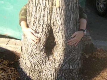 Деревянный Goatse