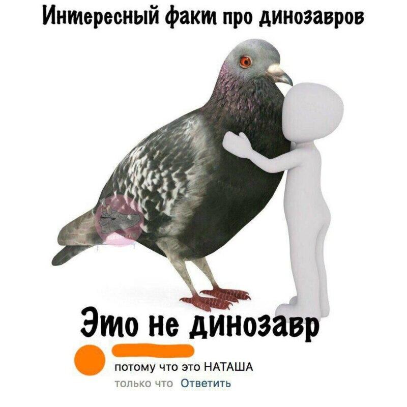 Мем про динозавра и голубя Наташу