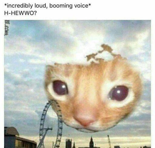 H-Hewwo Cat