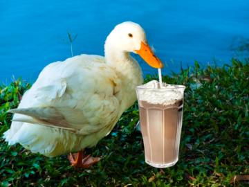 Milkshake Duck попивает молочный коктейль