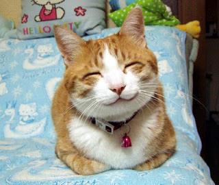 Nya Cat Face
