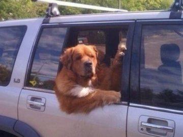 Ты кому сигналишь дядя пес