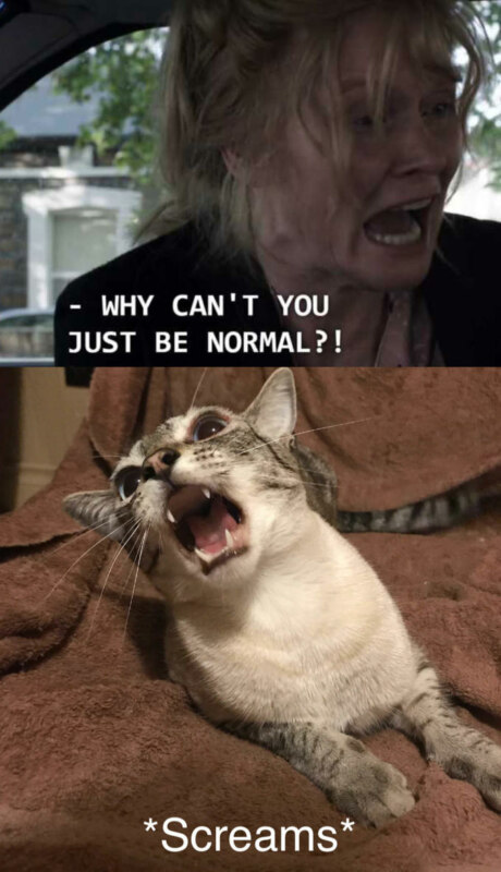 Why Can't You Just Be Normal - Meowbadook