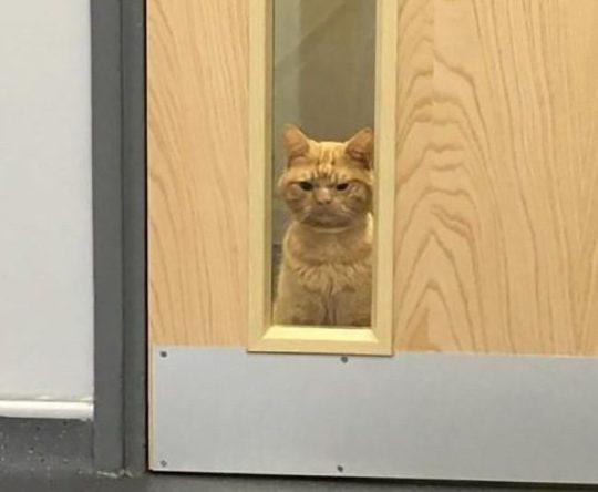 Сурового кота Сола сравнивают с Grumpy Cat