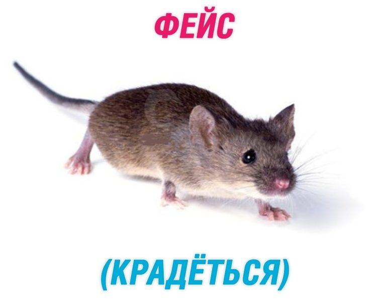 Фейс - крыса