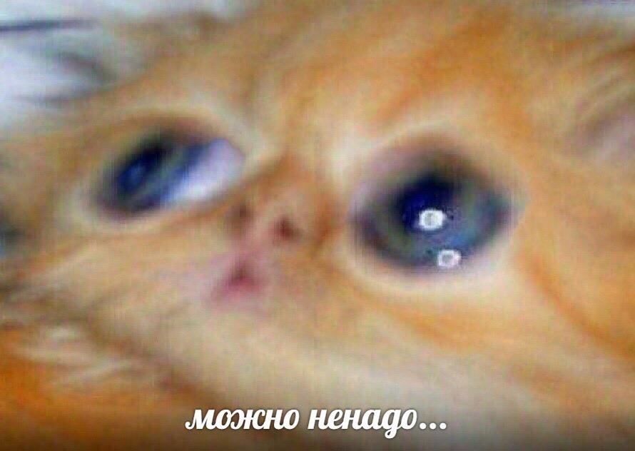 Можно ненадо - история мема с рыжим котенком