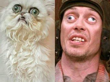 Страшный кот