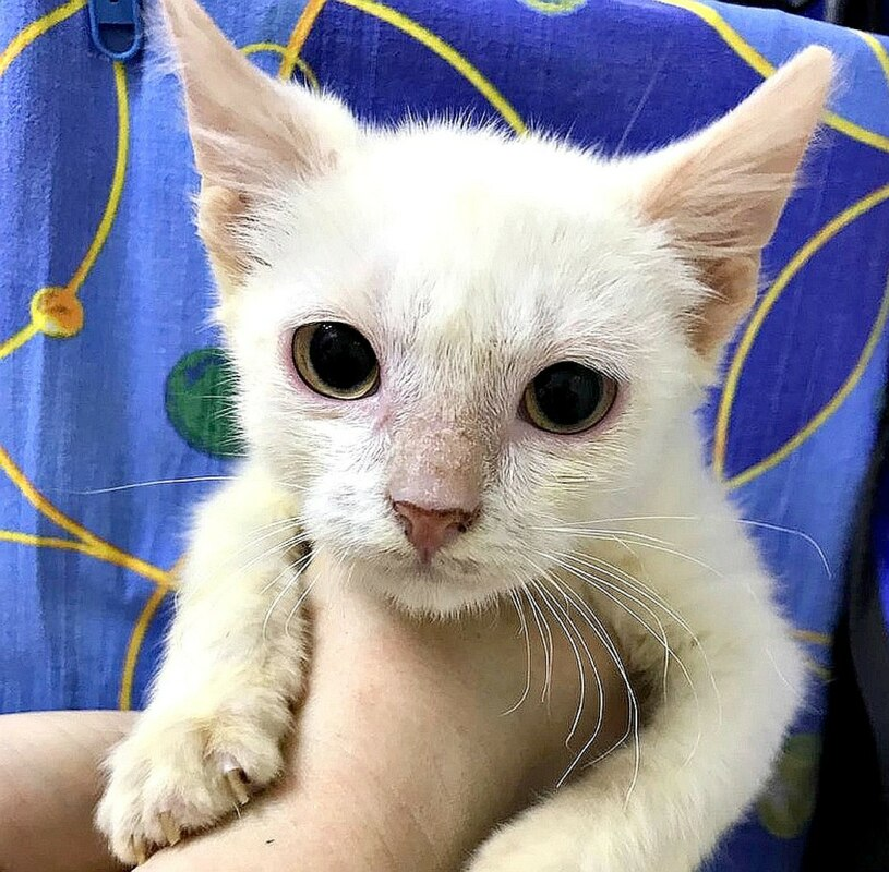 Журналисты нашли девушку из Майкопа, которая заплатила приюту для животных 340 тысяч
