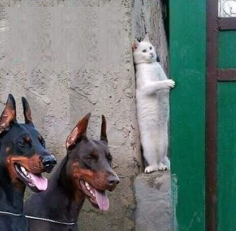 мемные коты года