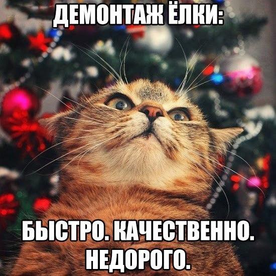 У Києві здали на утилізацію рекордну кількість новорічних ялинок, - КМДА - Цензор.НЕТ 641