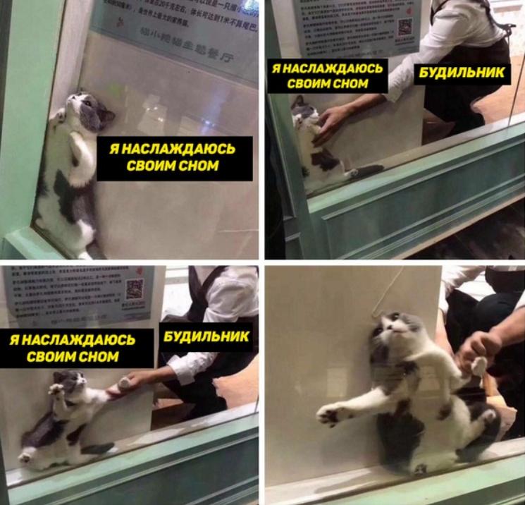 Кот застрял в оконной раме