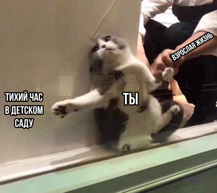 Кот застрял в окне мем