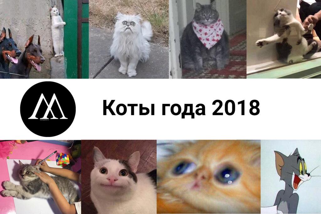 коты года