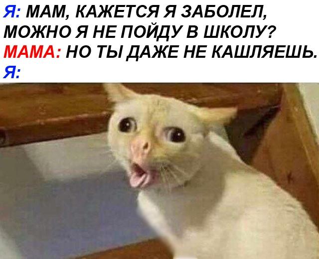 Кашляющий кот