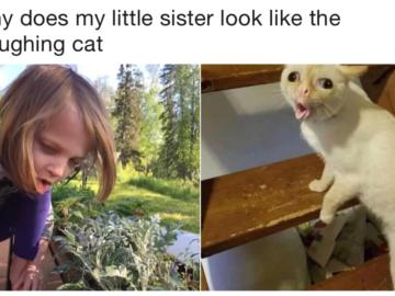 Мем кот кашляет