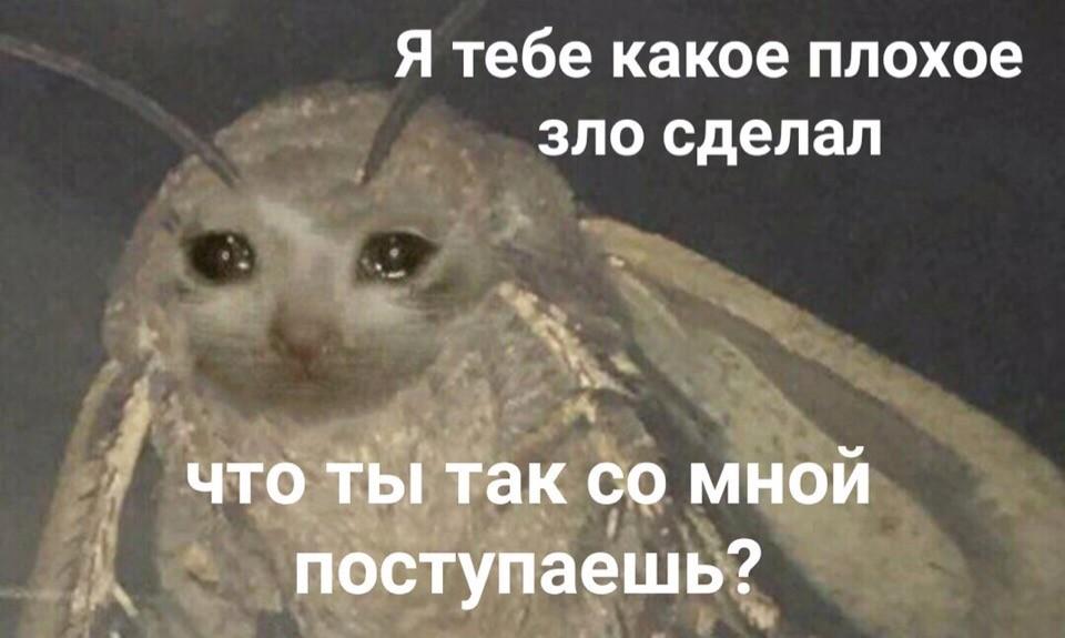 https://memepedia.ru/wp-content/uploads/2018/12/ya-tebe-kakoe-zlo-sdelal.jpg