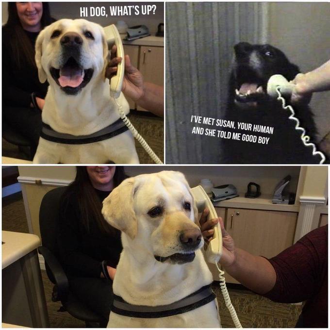 Собака говорит по телефону