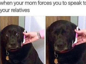Черная собака с телефоном