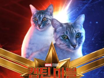 коты Капитан Марвел