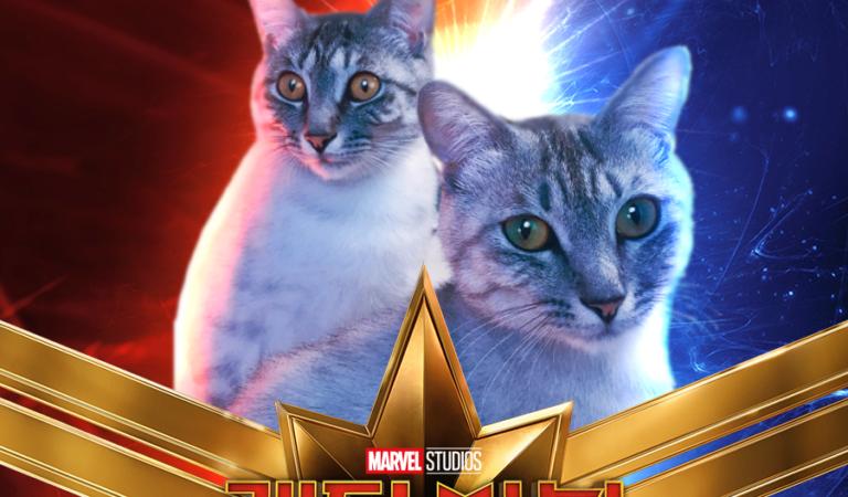 Люди фотошопят своих котов на постер фильма «Капитан Марвел»