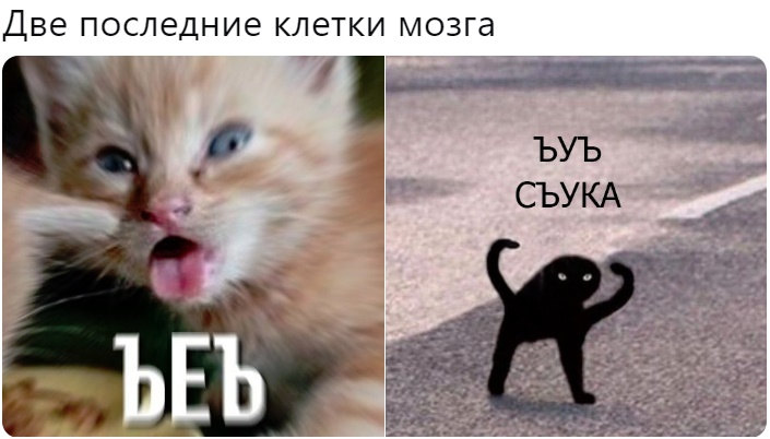 мем с котом ъуъ съука