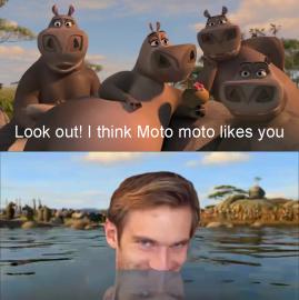 Мото Мото