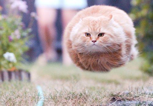 Летящий кот